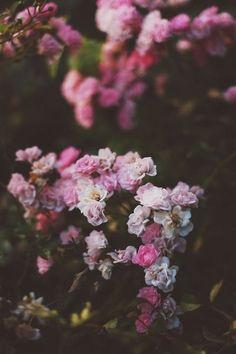 Flowers, in dim lighting Flower Power, My Flower, Pink Flowers, Beautiful Flowers, Pink Roses, Mother Nature, Planting Flowers, Flowers Garden, Flower Arrangements