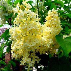 (34) Las Flores Mas Lindas