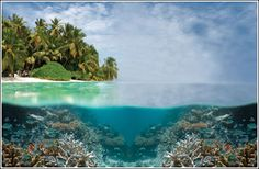 Tubbataha Reef Natural Park in Palawan, Philippines