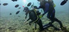 Mergulho Em Okinawa Ponto Sunabe