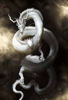This is for my eastern Dragon lovers I found this beautiful image of Pai Lung on. Mythical Creatures Art, Mythological Creatures, Magical Creatures, Dragon Artwork, Dragon Drawings, Dragon Pictures, Dragon Tattoo Designs, White Dragon, Creature Concept