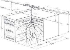 Root System Depth