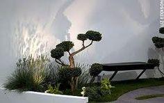 Cloud pruning sample 2