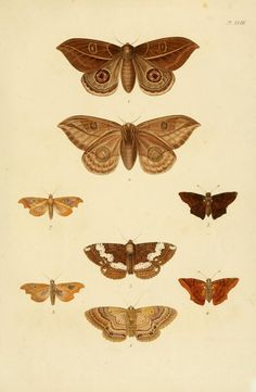 The Biodiversity Heritage Library works collaboratively to make biodiversity literature openly available to the world as part of a global biodiversity community. Moth, Insects, Zoology, Anatomy, Bugs