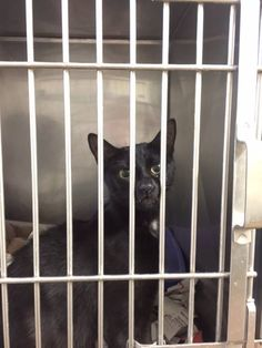 Stamford Animal Control Center Page Liked · 6 hrs · black  FOUND STRAY CAT... She was found on Harbor Drive  She is very friendly and is currently residing at Stamford Animal Control .  Please Share ... 203-977-4437