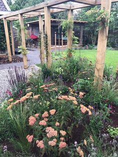 Aanleg duurzame tuin tuin in Haren; maatwerk overkapping, pergola, prairieborder, bestrating. Garden, Balcony, Plants, Pergola, Outdoors, Garten, Lawn And Garden, Outdoor Pergola, Gardens