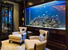 Invest in an aquarium to boost your wealth factor! Place your aquarium in the west, to strengthen your intelligence and career endeavors.