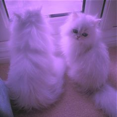 🌵┊꙳ 𝐏𝐢𝐧𝐭𝐞𝐫𝐞𝐬𝐭 purpleαripink Cute Animal Memes, Cute Animal Photos, Funny Animal Pictures, Cute Pictures, Cute Baby Cats, Kittens Cutest, Cats And Kittens, Cute Babies, Wallpaper Gatos