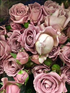 Garden Spray Roses - Amazing Lady. Sold in bunches of 10 stems from the Flowermonger the wholesale floral home delivery service.