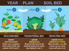 Your garden soil is the key to a better crop. The amazing natural techniques of crop rotation allow you to manage your soil, and increase yields. Check out our three-year crop rotation plan! Garden Soil, Edible Garden, Permaculture Garden, Herb Garden, Soil Improvement, Crop Rotation, Organic Soil, Growing Veggies, Sustainable Food