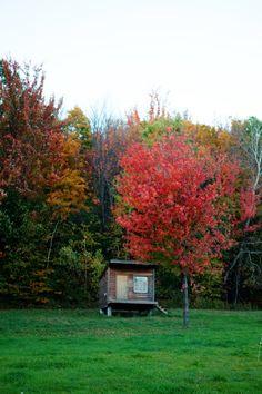 The autumn light and colors of Vermont :: Cannelle et VanilleCannelle et Vanille