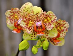 Orchids at the Orchid Festival, 2011. | par pedro lastra