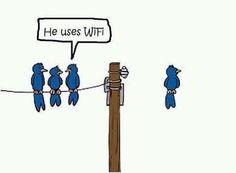 A Bird using WiFI