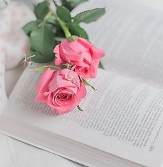 Books & flowers discovered by 𝓈𝒶𝓂𝒶𝓃𝓉𝒽𝒶 𝓈𝑒𝓇𝑒𝓃𝒶 ✰ Beautiful Flowers Wallpapers, Beautiful Roses, Cute Wallpapers, Book Flowers, Flowers Nature, Love Rose Flower, Jesus E Maria, Rose Flower Wallpaper, Flower Photos