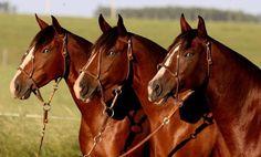 Quiero comprar mi primer caballo - http://www.noticaballos.com/quiero-comprar-primer-caballo.html