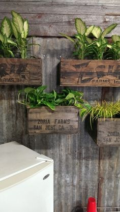 Upcycled crate wall garden
