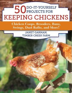Building A DIY Chicken Coop If you've never had a flock of chickens and are considering it, then you might actually enjoy the process. It can be a lot of fun to raise chickens but good planning ahead of building your chicken coop w Cheap Chicken Coops, Portable Chicken Coop, Best Chicken Coop, Chicken Coop Plans, Building A Chicken Coop, Chicken Runs, Chicken Swing, City Chicken, Chicken Coup