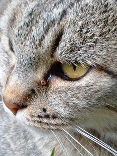 che sguardo cattivo! Milù #cat #catlove
