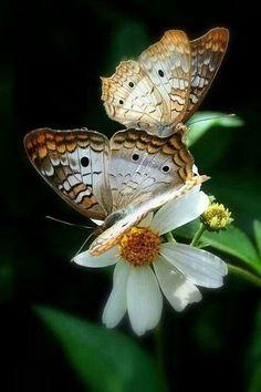 Flowersnature
