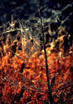 Instagram Challenge: Autumn | UncommonGoods