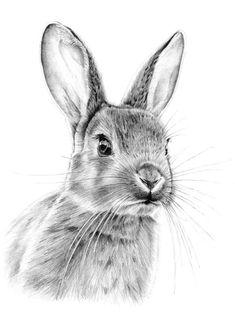 Pencil bunny from eatsleepdraw … animal drawings, drawing animals, art drawings, bunny drawing Animal Sketches, Drawing Sketches, Art Drawings, Sketching, Drawing Ideas, Pencil Sketch Art, Bunny Sketches, Bunny Tattoos, Rabbit Tattoos