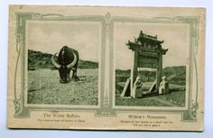 The Water Buffalo and Widow's Monument China POSTCARD