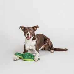 Does your dog chew on house plants? We have just the solution for you. Our cactus toy is a real treat for any pup. Made out of printed, recycled polyester, stuffed with soft filling it's the perfect toy for chewing, tug of war or just snuggling with. Funky Design, Dog Chews, Dog Accessories, Dog Gifts, New Toys, Pet Shop, Snuggles, Making Out, Boston Terrier