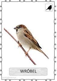 Podobny obraz Bird Theme, Bird Drawings, Classroom Themes, Beautiful Birds, Preschool Activities, Kids Learning, Kindergarten, Teaching, Education