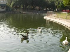 Feed the ducks at this historic home in Encino. Los Encinos State Historic Park