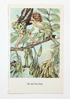 Ash Tree Flower Fairy Print, Vintage Bookplate, Fairy Picture, nursery decor, green by PeonyandThistlePaper on Etsy https://www.etsy.com/listing/198282494/ash-tree-flower-fairy-print-vintage