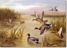 Edgar Hunt - Mallards Flying 1926. Edgar Hunt (1876-1955) and his brother Walter who were born in Birmingham, were the third generation in the Hunt family to become artists. Edgar had no formal art training but was schooled by his father. He specialised in painting exquisitely detailed works of farmyard scenes and animals, executed meticulously in a realistic style which never changed throughout his career. The artist lived in the Midlands and sold many of his pictures there.