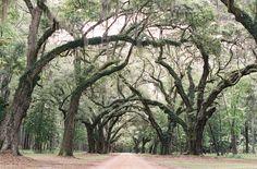 Southern Spanish Moss   Charleston, SC