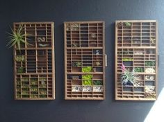 DIY Mini Vertical Garden in Upcycled Vintage Print Drawers by Stephanie Van Dyke, houzz.