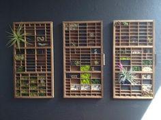 DIY Mini Vertical Garden in Upcycled Vintage Print Drawers by Stephanie Van Dyke, houzz.