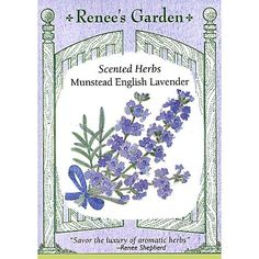 Lavender:  Renee's Garden ~ How to Grow Lavender.