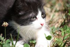 The kitten by Queen-of-darknesss.deviantart.com on @deviantART