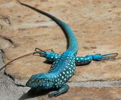 Wow!  Even the lizards are beautiful!