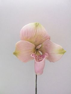 Thai Slipper Orchid by Tamiko's Sugar Design, via Flickr