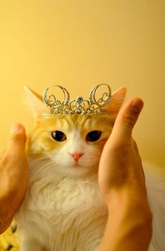 Like a princess