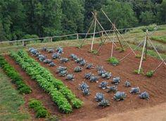 Planning a home garden