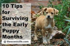Dog Training - CLICK THE IMAGE for Various Dog Care and Training Ideas. #dogtrainingideas #dogcommandstraining