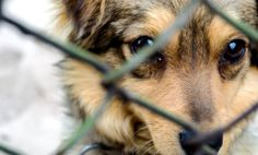 How to Spot & Prevent Animal Abuse (Infographic)