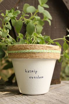 "4"" Katnip Everdeen » Catnip Herb Indoor and Outdoor Pot or Planter 