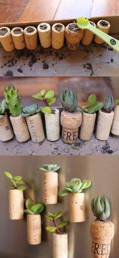 wine cork succulent magnets // kinda cute!