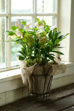 Burlap ~Cover a not so pretty pot, or a chipped or broken one...