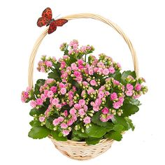 #mothersday #butterly #basket #flowerbasket #plantbasket #flowerdlelivery #mothersdaygifts #mothersdayplants #mothersdayflowers