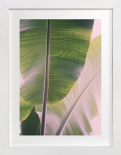 Tropic by ALICIA BOCK at minted.com
