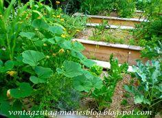 Hochbeet im Bauerngarten. Ringelblumen zwischen dem Gemüse.  @vontagzutagmari http://vontagzutag-mariesblog.blogspot.com