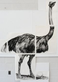 Lifesize Ostrich Drawing by SafeAsMilk.deviantart.com on @deviantART