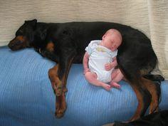 """De relatie tussen mens en hond is werkelijk iets heel bijzonder. En deze schattige baby toont ons aan dat ook hier geldt: """"Jong gedaan, is oud geleerd!"""" Als je er eventjes niet bent, staan de honden onmiddellijk klaar om te babysitten."""